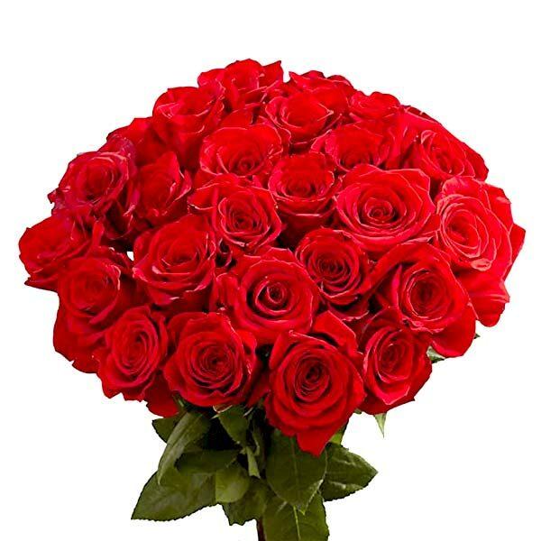 Global Roses for Valentime